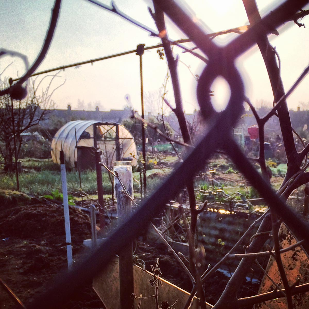 Higham Hill Allotment, Walthamstow