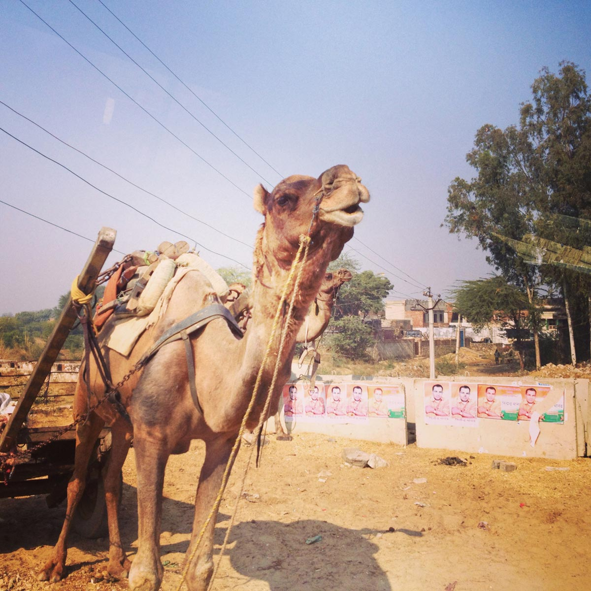 Camal, Rajasthan, India