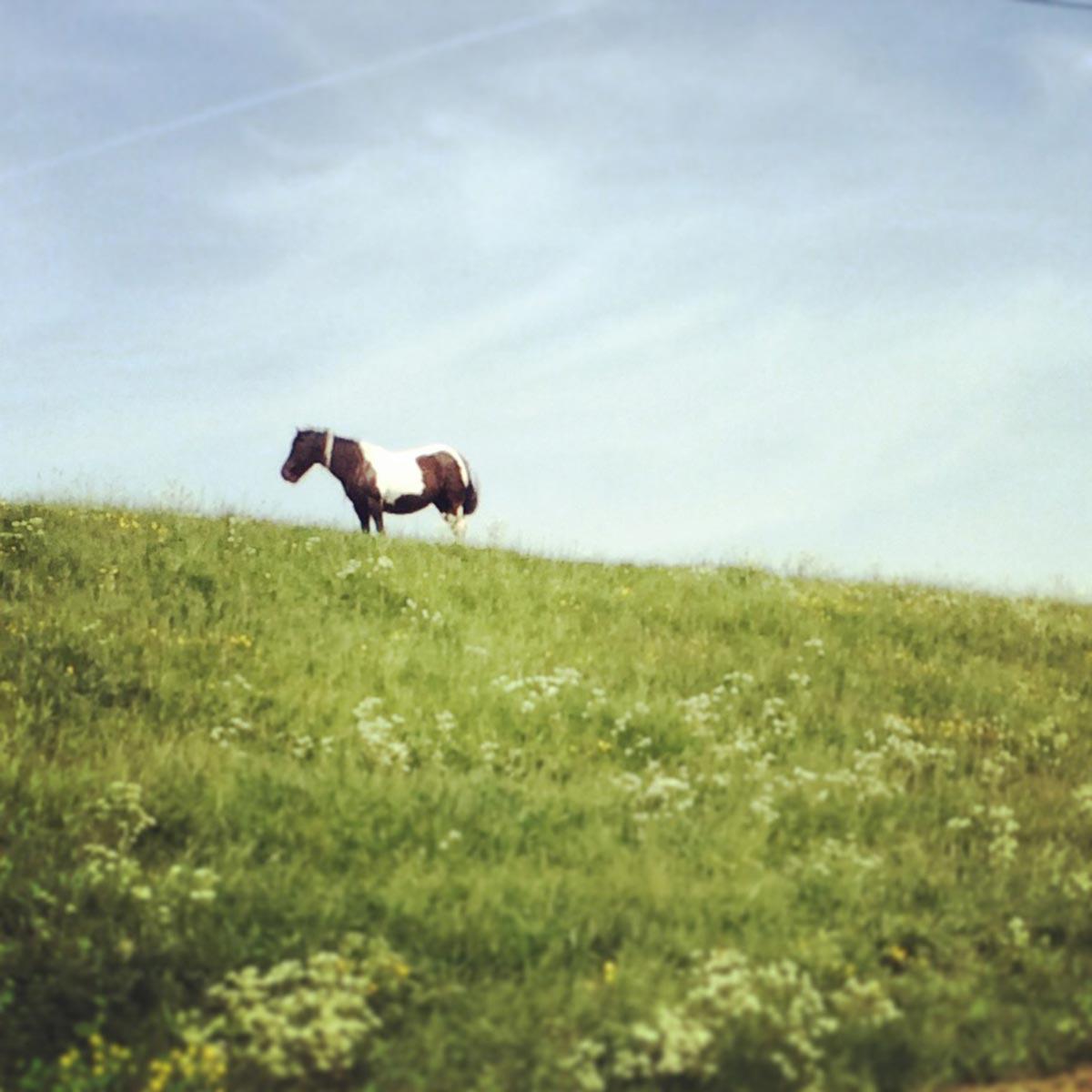 Walthamstow Shire Pony