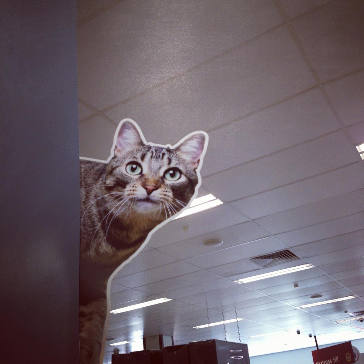 Wilkinson's cardboard cat